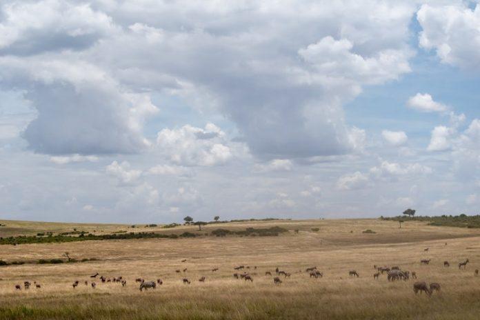 Landscape of Maasai Mara savannah with animals during a safari in Kenya