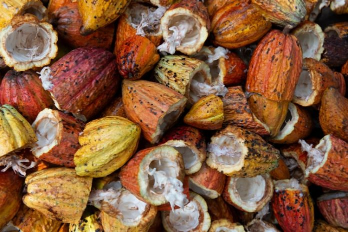 Ghanaian Government Partners UK Mapping Firm To Monitor Cocoa Farms