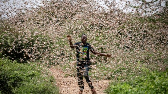 Authorities to employ satellite imageries to tackle Locust outbreaks in East Africa
